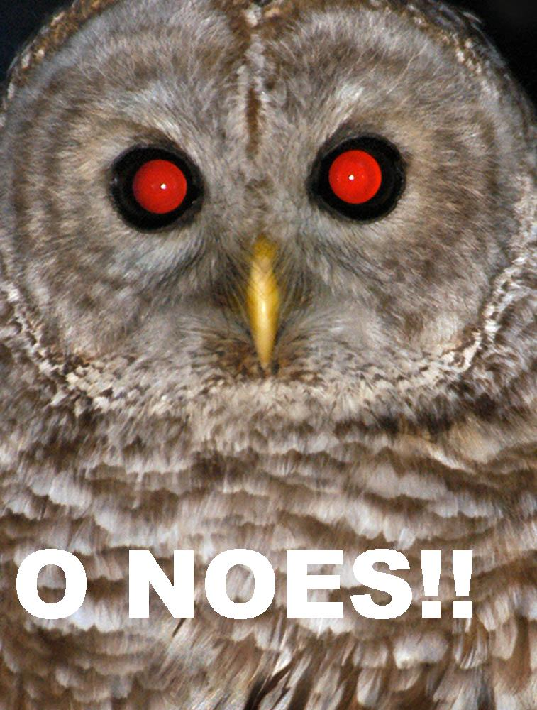 o_noes.JPG