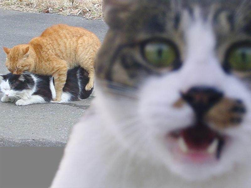 catsecks